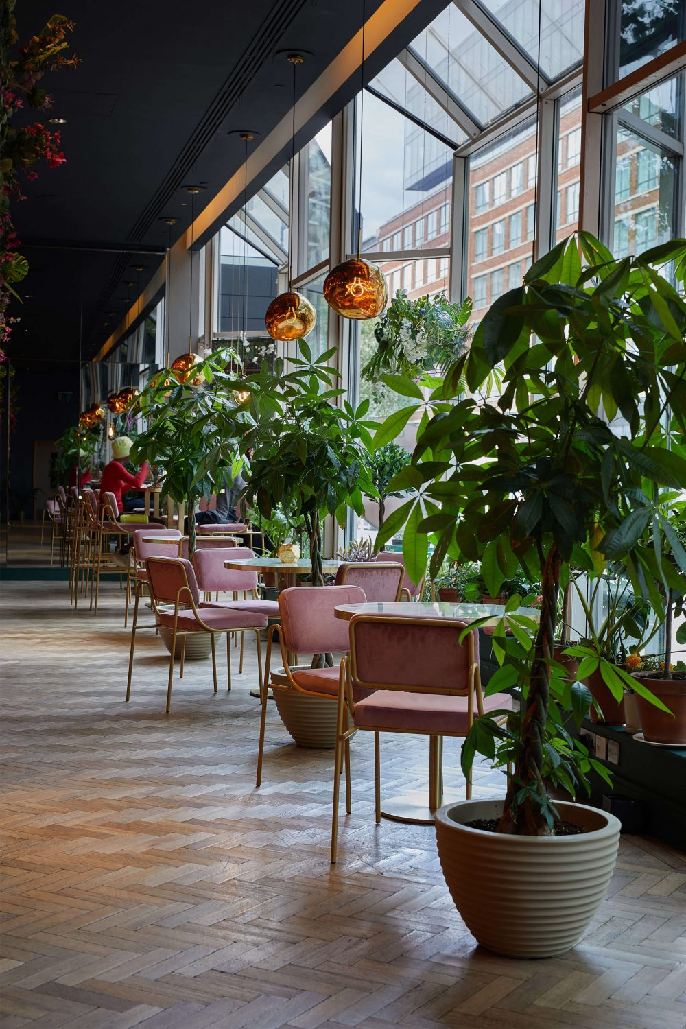 Potted plants indoor jungle seating